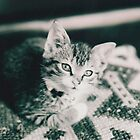 Kitten by joerelic37