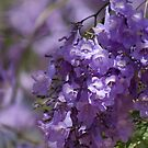 Jacaranda time  by Margaret Stanton