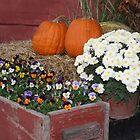 Harvest of Colors by Susan Blevins
