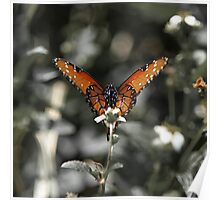 Tropical Queen Butterfly - Everglades, Florida Poster
