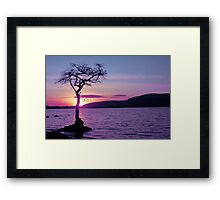 Don't let the Sun go down on Tree. Framed Print