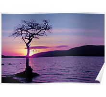 Don't let the Sun go down on Tree. Poster