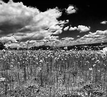 """""""Country Fields"""" by Heather Thorning"""