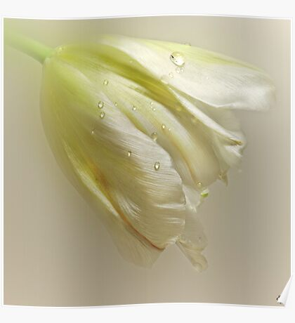 The White Tulip Poster
