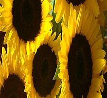 Sunflower iPhone 4/4S Case by purplesensation