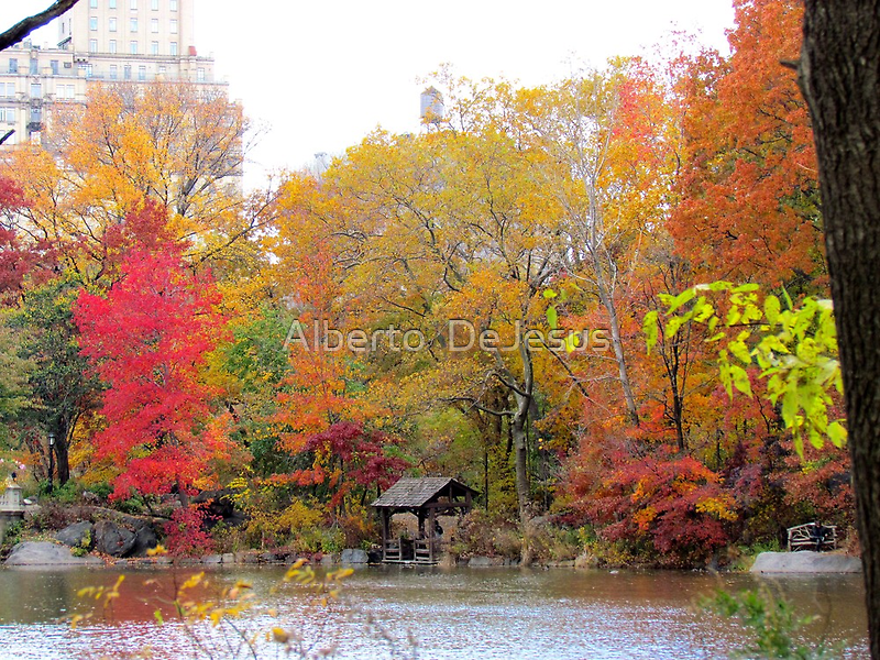 Hazy Autumn day in Central Park, New York City by Alberto  DeJesus