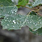 Water on a Leaf by LESpiker