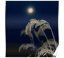 November moonrise. Poster