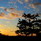 The Sunset Tree by Robin Lee