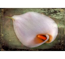 Arum Lily Photographic Print