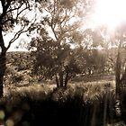 Winter Sun by Camilla