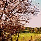 Adelaide Hills Hues by Camilla