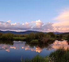 June - Wetlands. by bberwyn