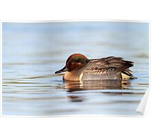 Tealicious / Green Winged Teal Drake Poster