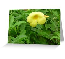 A yellow trumpet in the morning Greeting Card