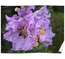 Bright spinning purple flowers Poster