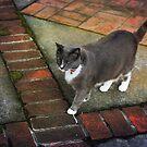 Cat walk by Lynn Starner