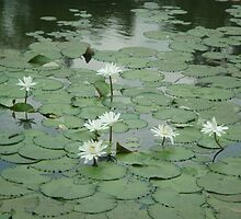 Dance of the water lilies by Joseph Green