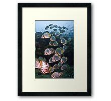 Batfish Ladder Framed Print