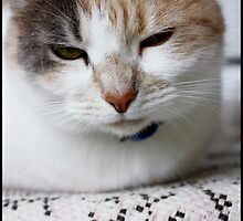Say What? by lilliputian