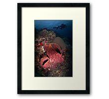 Sponge Diver Framed Print