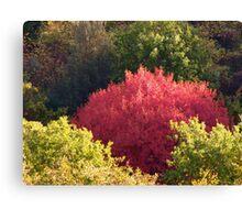 Tuscan fall tree Canvas Print