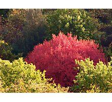 Tuscan fall tree Photographic Print