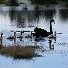 Family Time by byronbackyard