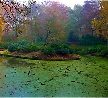 Duck Pool by Janone