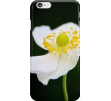 White Anemone (iPhone & iPod case) iPhone Case/Skin