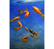 Feng Shui Fish Photographic Print