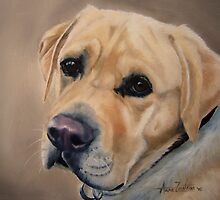 Labrador Expression by Anne Zoutsos