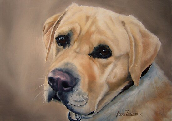 Labrador Expression by Anne Zoutsos