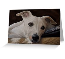 Whippet At Rest Greeting Card