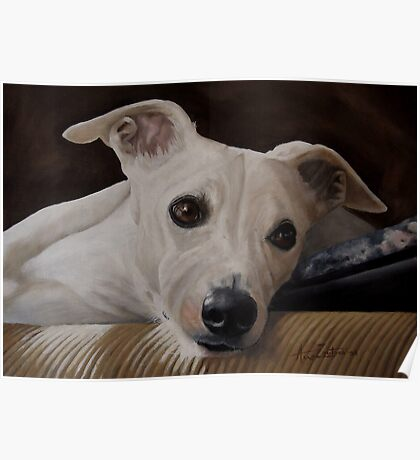 Whippet At Rest Poster