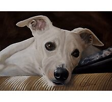 Whippet At Rest Photographic Print