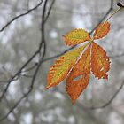 Solitary leaf by Stephanie Owen