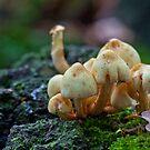 Fungi No1 by Ray Clarke