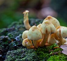 Fungi No1 by Ray Clarke