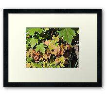 Autumn Leaves (Twycross) Framed Print