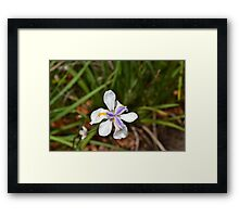 Feeling Refreshed after the rain Framed Print