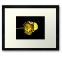 Water Lily Bud Framed Print