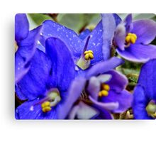 Blooming Violets Canvas Print