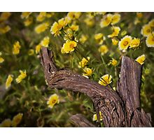 Golden wildflowers Photographic Print