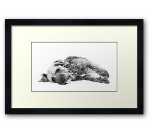 Cute Pup Lying Down Framed Print
