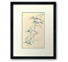 Sketching birds Framed Print