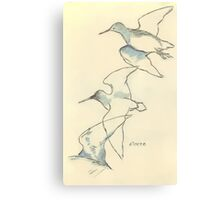 Sketching birds Canvas Print