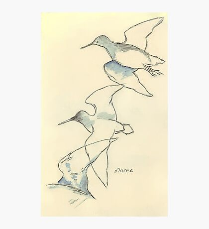 Sketching birds Photographic Print
