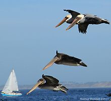 Pelican Panache  by GreenSaint