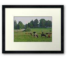 Cows herd. Framed Print